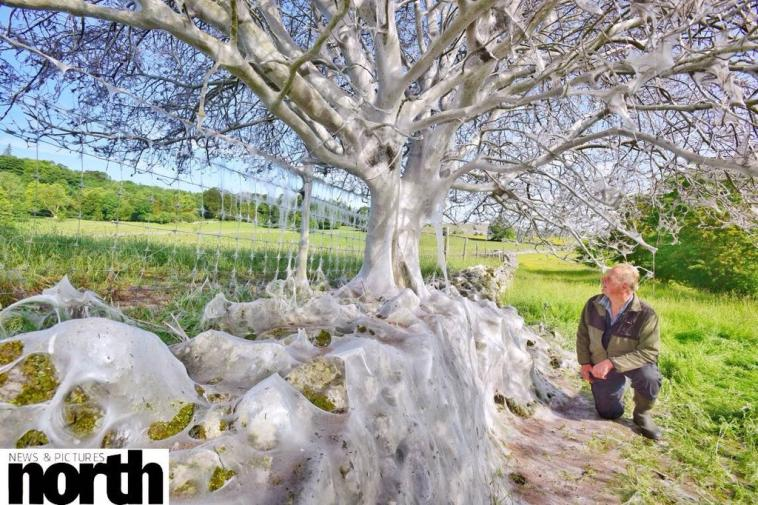 Name:  Tree in The Yorkshire Dales.jpg Views: 19 Size:  104.2 KB