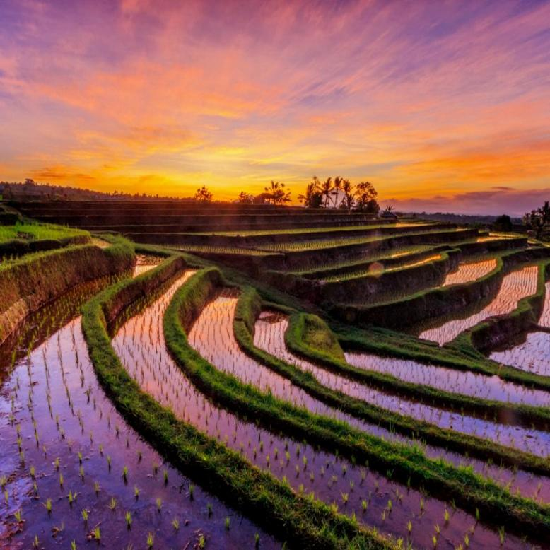 Name:  Rice Fields in Asia.jpg