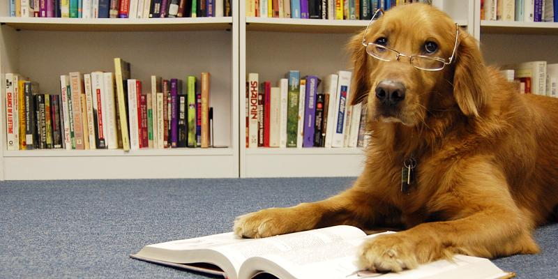 Something to read-dog-reading-book-facebook.jpg