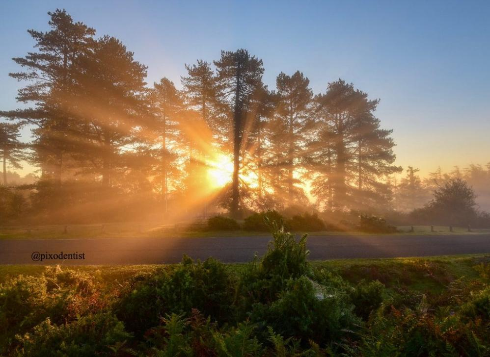 Name:  Autumn morning from New Forest.jpg