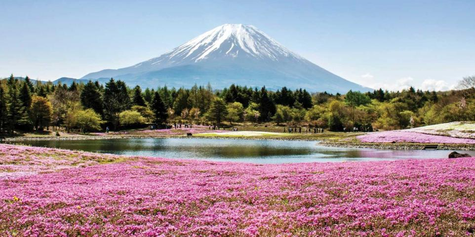 Name:  hc-a-as-japan-mount-fuji-view-across-pink-flowers-in-spring-461935783-i-12-5.jpg Views: 1 Size:  106.3 KB