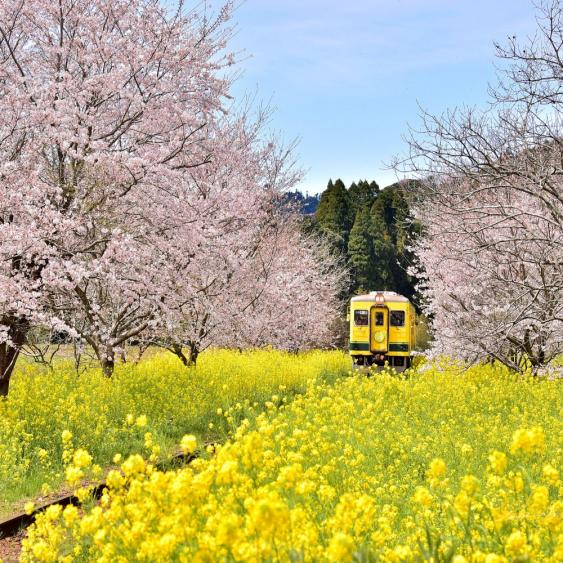Name:  Colorful landscape and nature in Japan.jpg